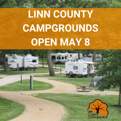 RVs and campers at campground