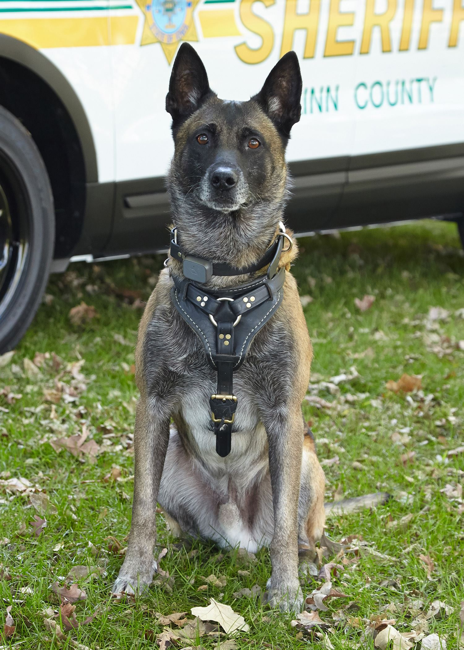 Linn County Sheriff's Office K9 Gucci