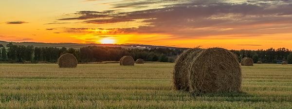 View of a field at sunset and hay bail