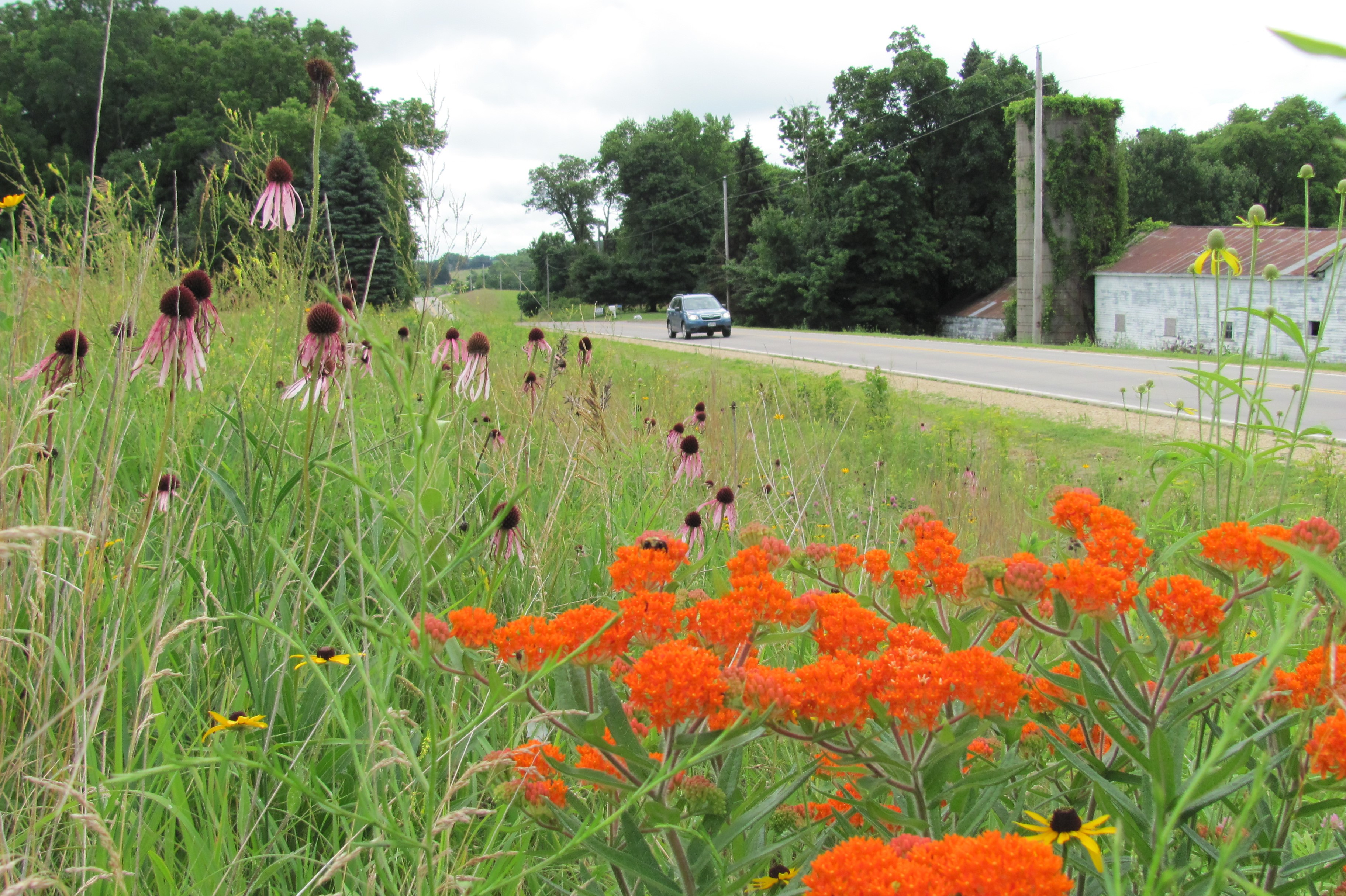 Flowers bloom along Linn County roadway